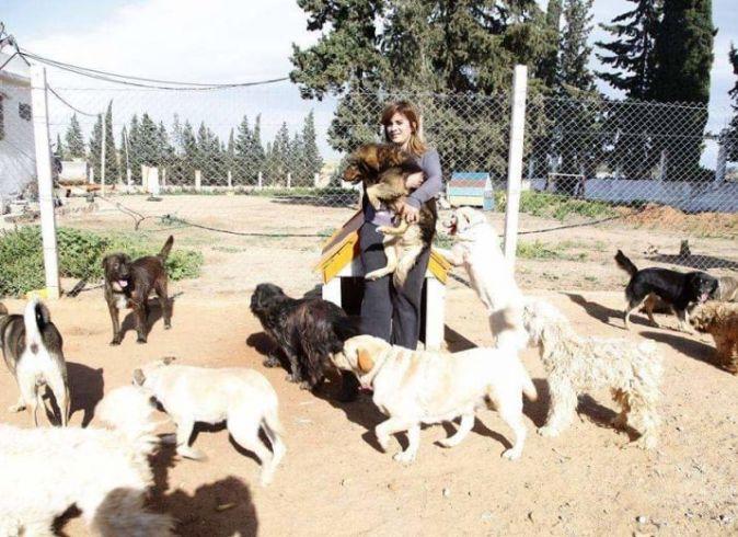 Froid en Tunisie, Une Cagnotte URGENTE pour venir en aide aux animaux de Sabrina